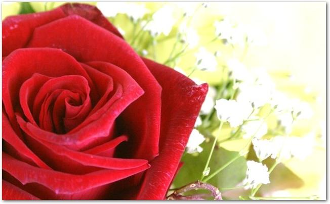 赤いバラとカスミソウの生花のコサージュ