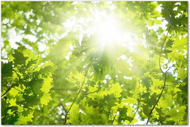 太陽の光が差し込む新緑の木々の様子
